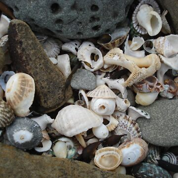 Sea Shells and Stones by synthmax