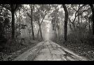 ~ a foggy beginning ~ by Adriana Glackin