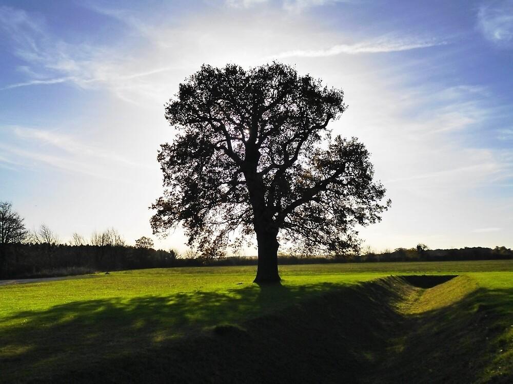 Backlit Tree by Arne-Jan Paalzow