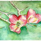 Dogwood Blossoms by Amanda  Shelton