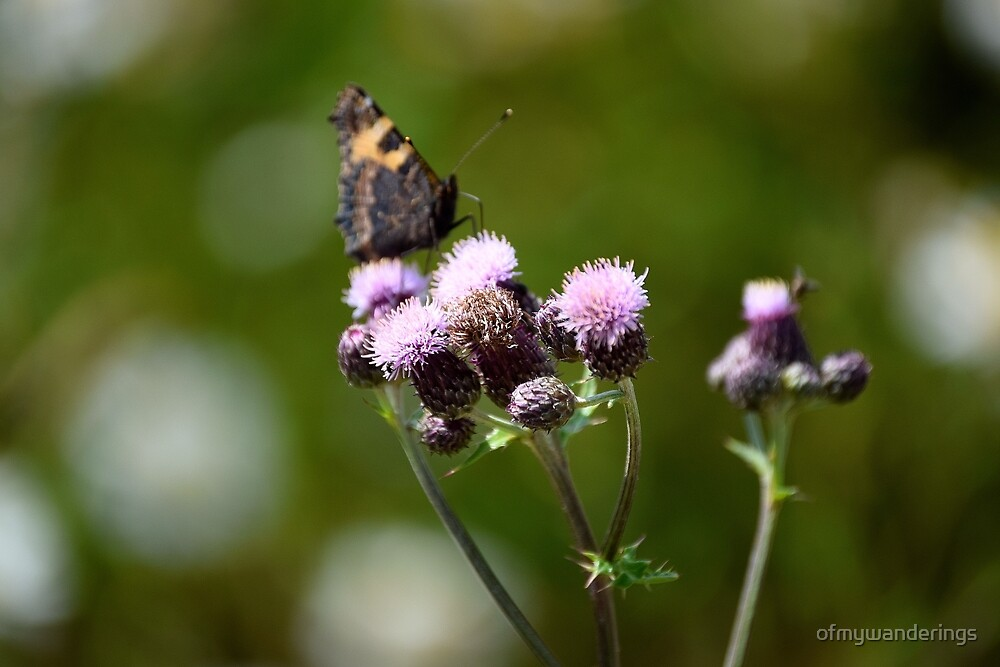 A Thistle Pitstop by ofmywanderings