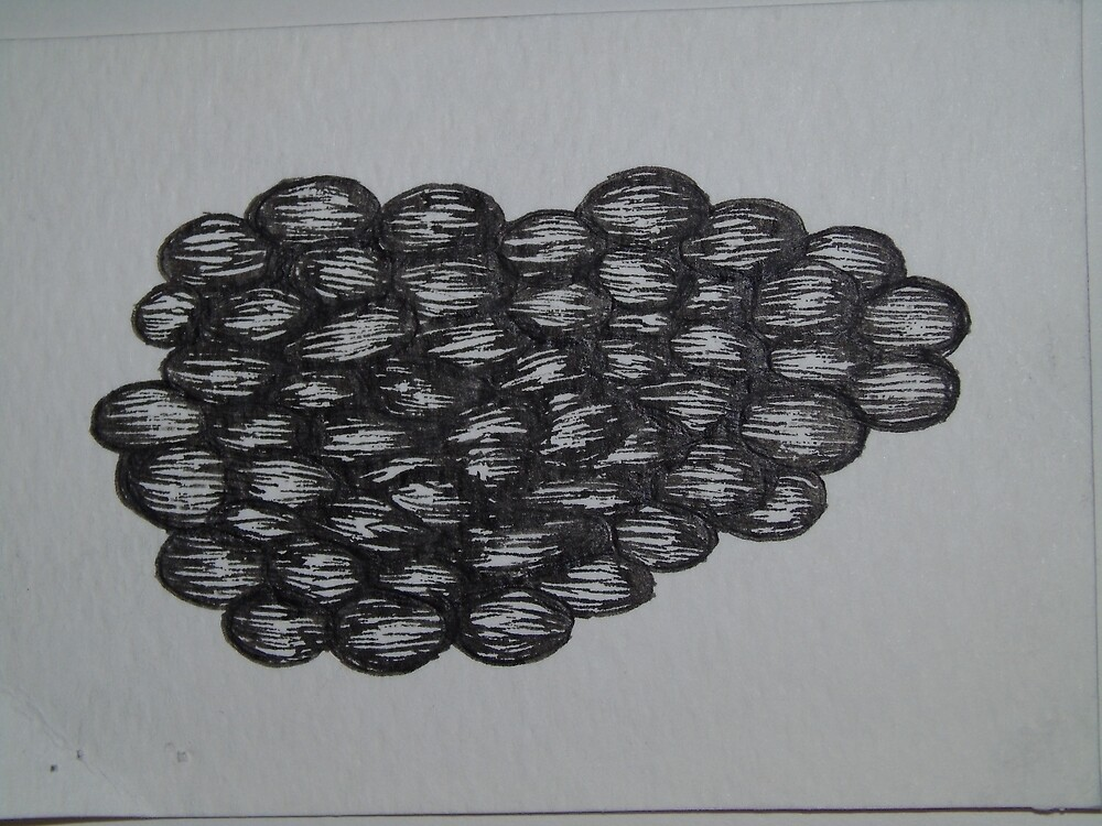 Growth, Ink Drawing by morgsmiddleton