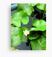 flower / green /water /nature / white Canvas Print