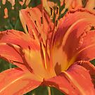 Dancing Day Lily by Fay270