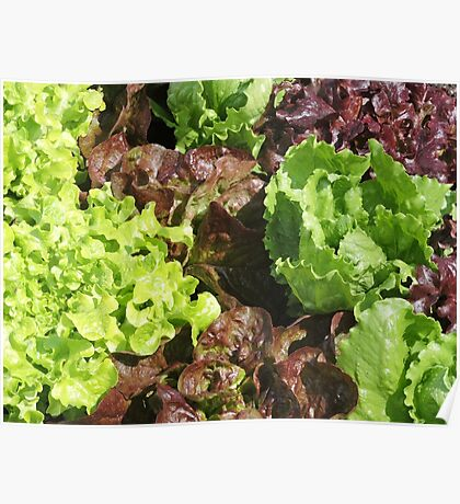 Vegetable Garden: Lettuce Galore Poster