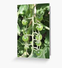 Vegetable Garden: Tomatoes Greeting Card