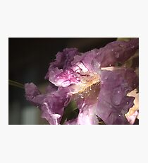 Desert Willow Photographic Print