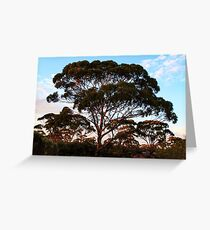 Salmon Gum, Goldfields WA Australia Greeting Card