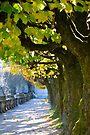 Autumn Sun, Salzburg by Tiffany Dryburgh