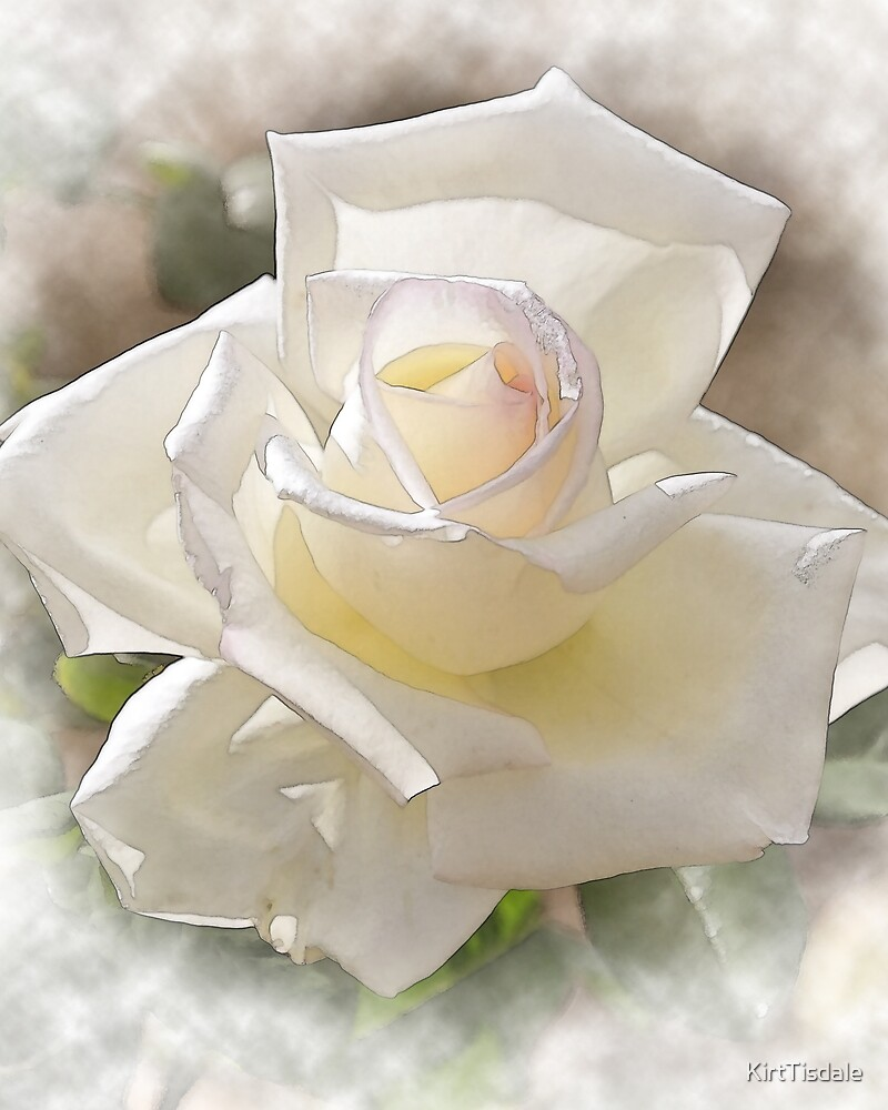 White Rose Bloom In Watercolor by KirtTisdale