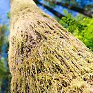 Tree Moss - Rattlesnake Ledge, Washington by Jason Heritage