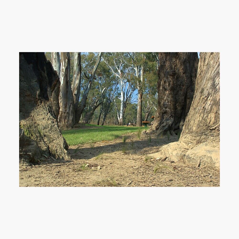 secluded park Photographic Print