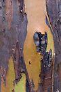 Bark 6 by Werner Padarin