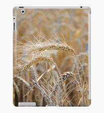 Ripe heads of golden wheat in the field iPad Case/Skin