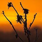 Warm frost by Kol Tregaskes