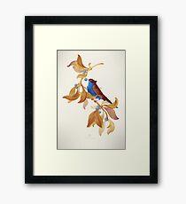 Blue birds song Framed Print