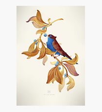 Blue birds song Photographic Print