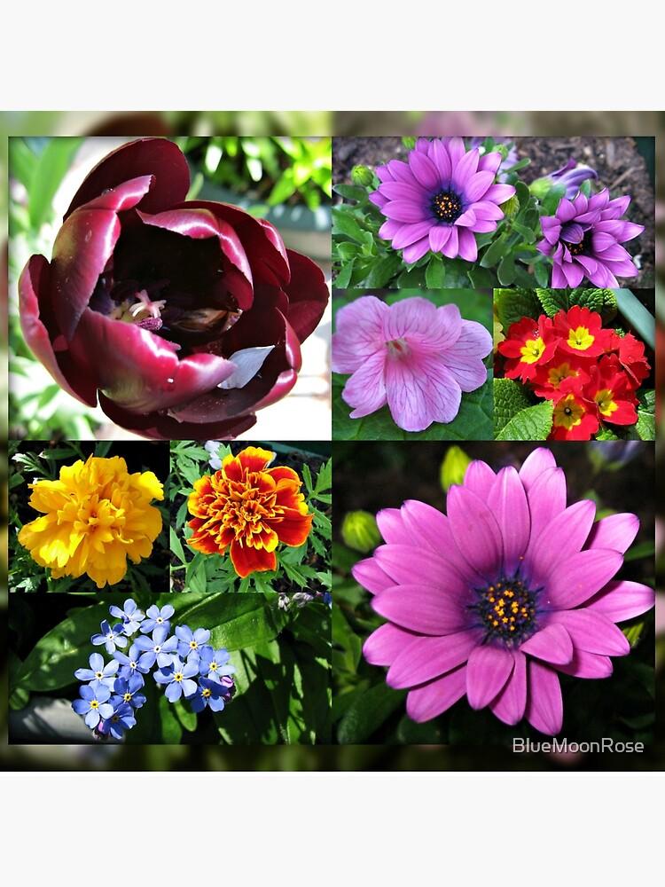 So lange, Frühling! Hallo, Sommer! Sonnenschein-Blumen-Collagen von BlueMoonRose