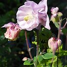 Pastel Bell Blossoms by Kashmere1646