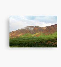 Sable Pass, Denali National Park Canvas Print