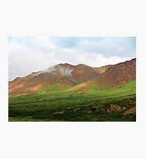Sable Pass, Denali National Park Photographic Print