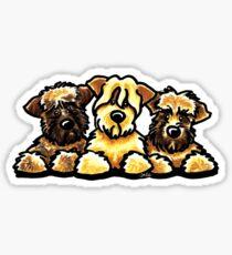 Three Wheaten Softies Sticker
