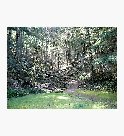 Another Path... Photographic Print