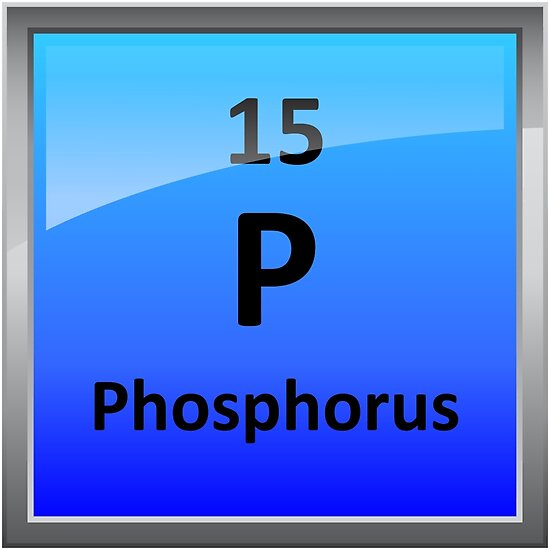 Phosphorus Element Tile Periodic Table Posters By Sciencenotes