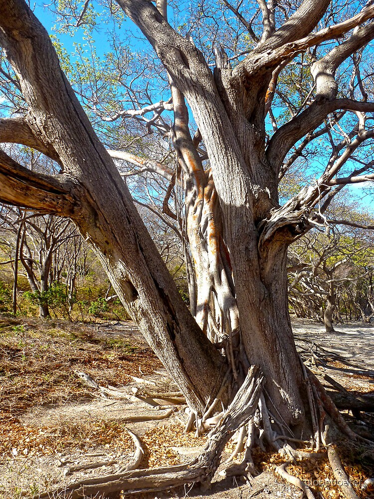 Old Gnarled One by globeboater