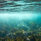 Sydney Habour subtidal zone by Emma M Birdsey