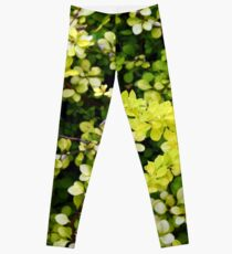 Green leaves pattern. Leggings