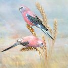 Bourkes Parrot by Trudi's Images