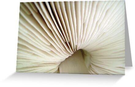 Fungi by Kitsmumma