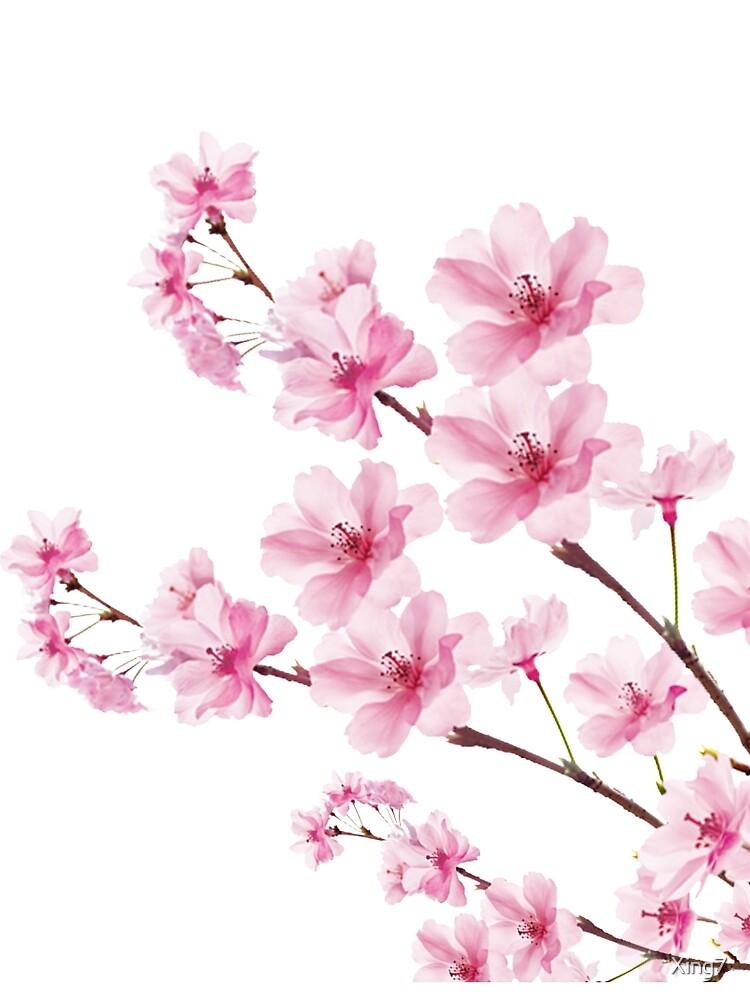 Sakura Cherry Blossom by Xing7