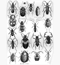 insects vintage Poster