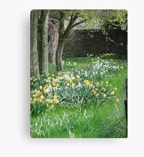 Spring Daffodils in Southern England Canvas Print