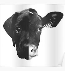 Animal Equality - (Black & White) Poster