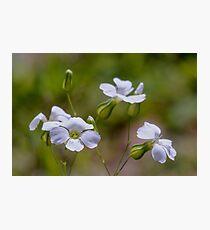 tinny white flower Photographic Print