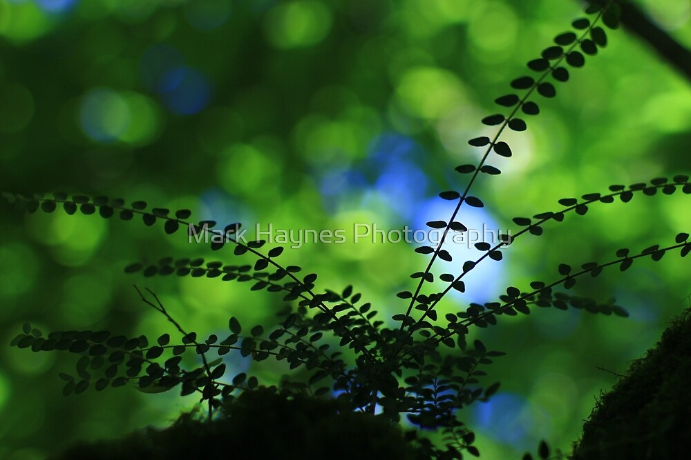 Privet With Sycamore & Sky - Vintage Lens by Mark Haynes Photography