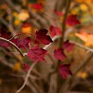Red Remnants at Hill End NSW by Barbara Burkhardt