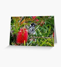 Yellow Top - New Holland Honeyeater Greeting Card