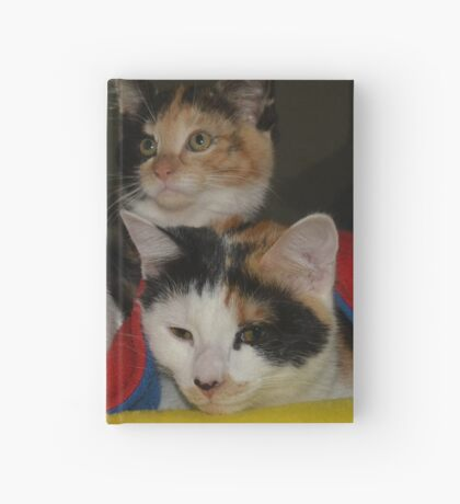 Three meows in a row Hardcover Journal