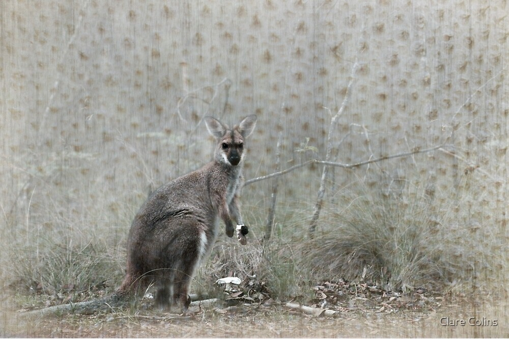 Wallaby Tea Time by Clare Colins