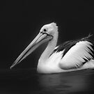 Pelican 2 by Charuhas  Images