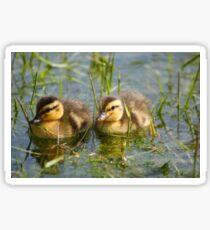 Cute Ducklings Sticker