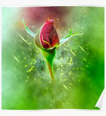 Digitally manipulated red Rose bud Poster