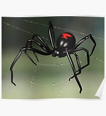 Black Widow Spider Poster