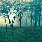 foggy forest by Laurahtje