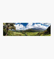 Hanalei Valley's taro fields in Kauai, Hawaii Photographic Print