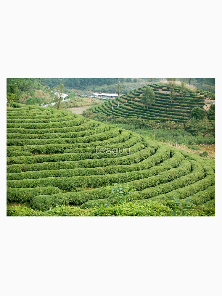 Chinese Green Tea Plantation by teaguy